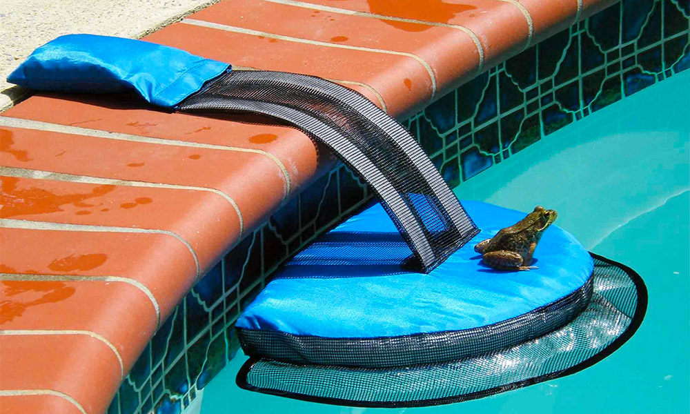 Why frogs loves your pool?