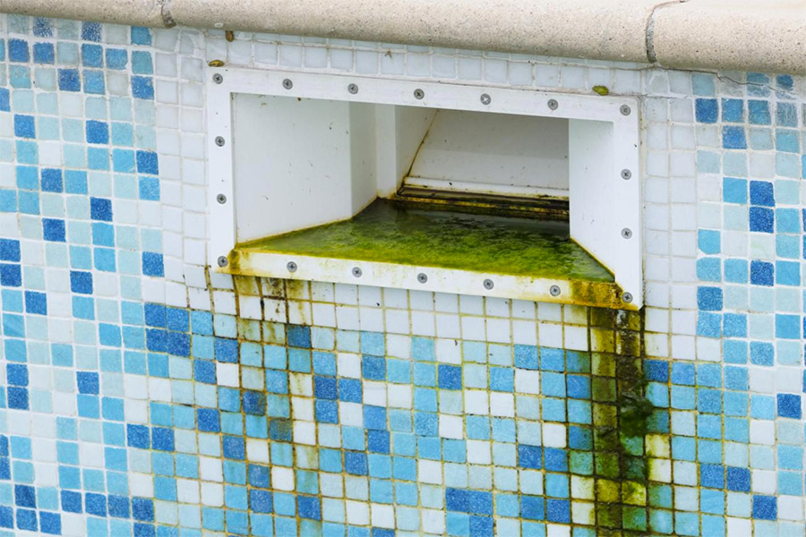 Swimming pool turned green because of algae and mold